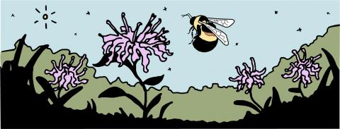 Evanston Host Plant Initiative for Rusty Patch Bumblebee